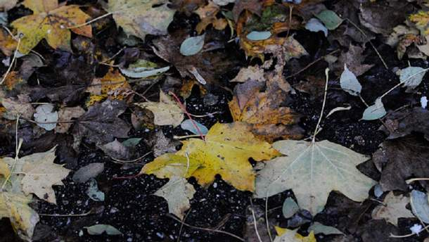 Прогноз погоди на суботу, 11 листопада, у містах України