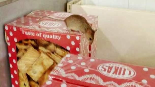 Мышь в киевском супермаркете