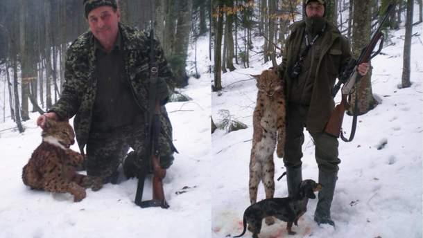 В Карпатах лесник убил рысь: полиция открыла дело