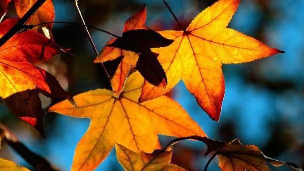 Погода 16 ноября в Украине будет сухой и солнечной