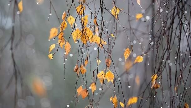 Прогноз погоды в Украине на 19 ноября