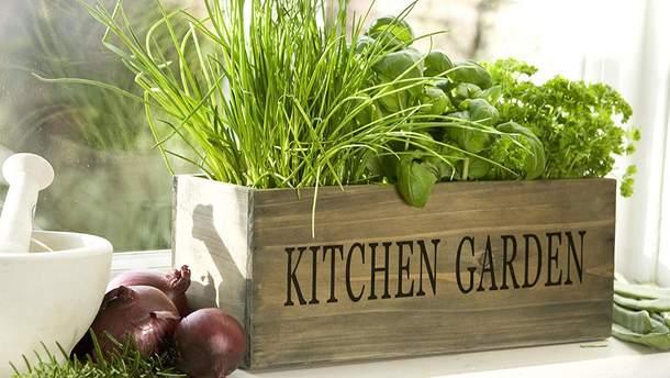 5 полезных продуктов, которые вы можете вырастить на собственном подоконнике