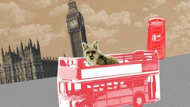Лиса проехалась в лондонском автобусе
