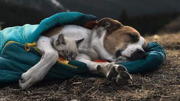 Собака Генрі і кіт Балу