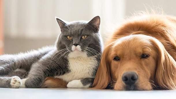 Кішки та собаки