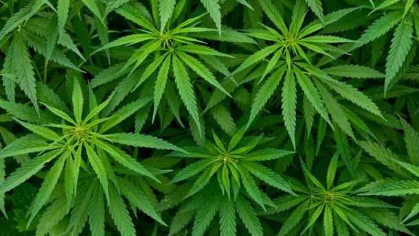 В Грузії декриміналізували марихуану
