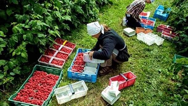 Українські заробітчани у Польщі