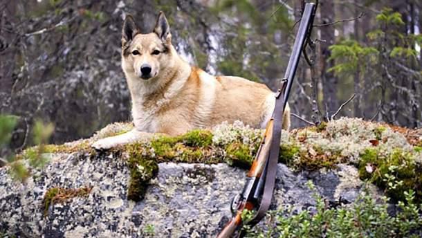 Пес подстрелил своего хозяина на охоте