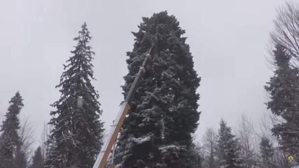 Главная елка страны 2018