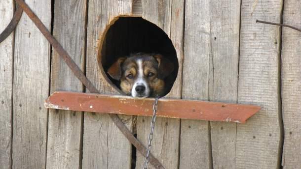 Невідомі потруїли собак