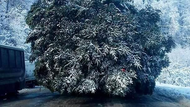 Главная елка страны 2018 прибыла в Киев