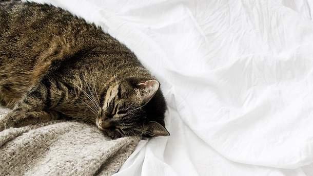Денний сон шкідливий для здоров'я
