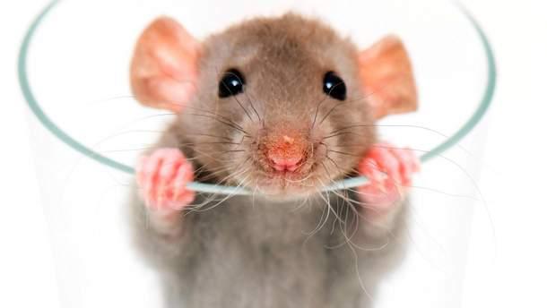 В США отменили рейс из-за крысы на борту