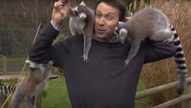 Лемуры покусали журналиста в зоопарке