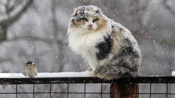 Прогноз погоди на 11 січня: на заході та сході випаде сніг, місцями мокрий
