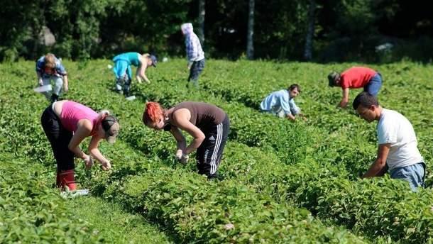 Польщі вигідні заробітчани з України, адже її власна робоча сила виїхала за кордон