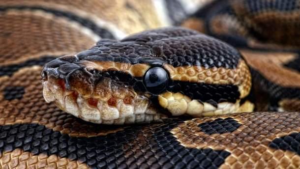 На Закарпатье прохожих напугала огромная экзотическая змея