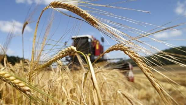 Экспорт пшеницы
