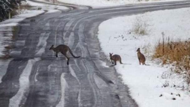 В Австралии в разгар лета внезапно выпал снег