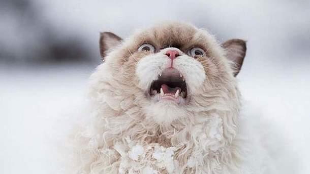 Реакция кота на первый снег