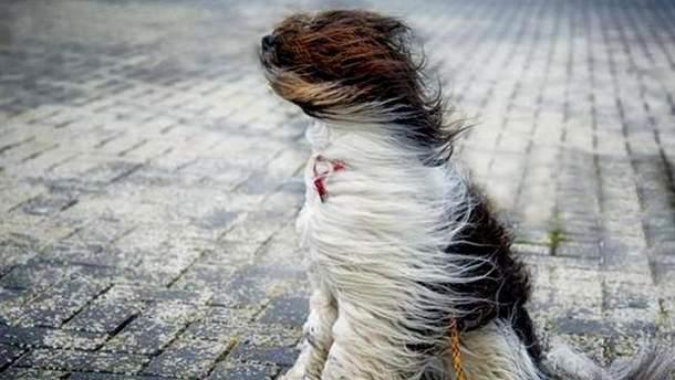 Где будет сильный штормовой ветер