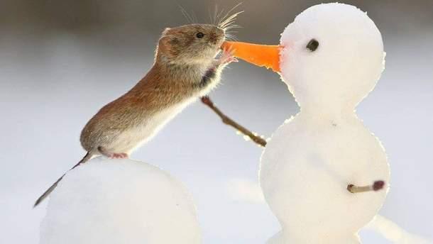 Погода в Украины 20 января будет морозной