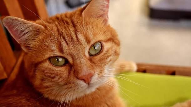 Кіт, який отримав спадок