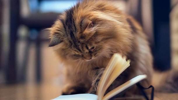 Чому потрібно завести кота