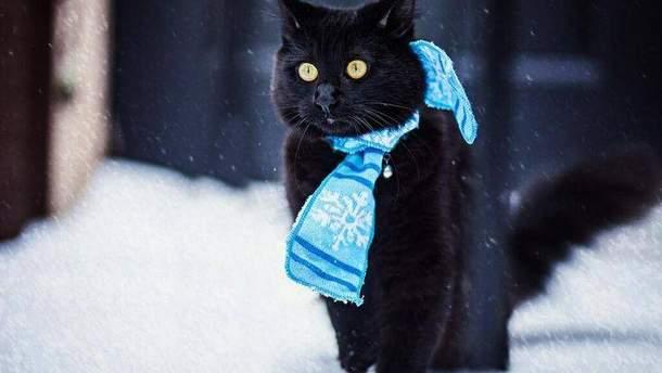 В Украину идет похолодание с морозами и снегами