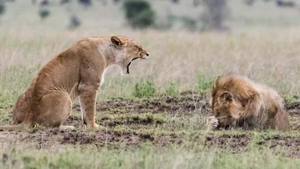 Сварка левів