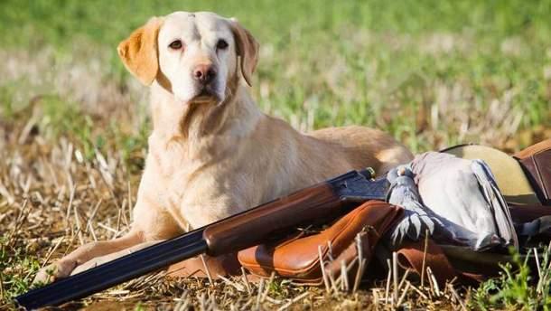 В России собака на охоте застрелила человека