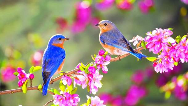 Картинки по запросу весна фото