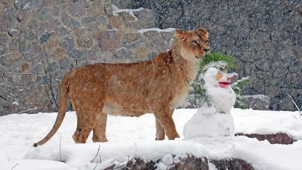 Животные Киевского зоопарка во время снегопада