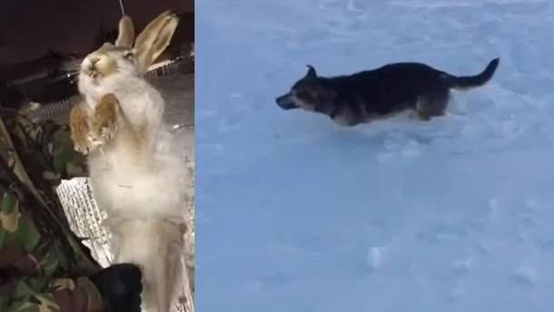 Аномальные морозы до -56 свирепствуют в Казахстане