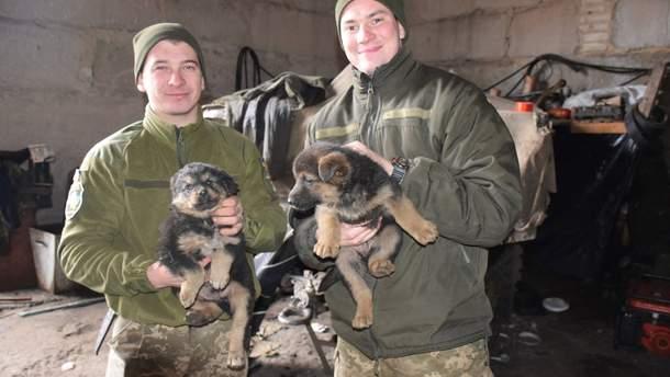 Собаки у 44-ій окремій артилерійській бригаді в зоні АТО
