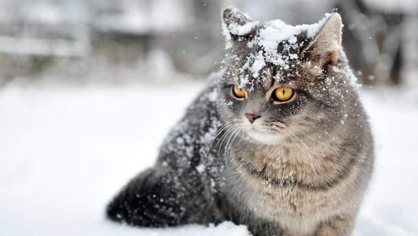 В России кот не дал замерзнуть пропавшему парню