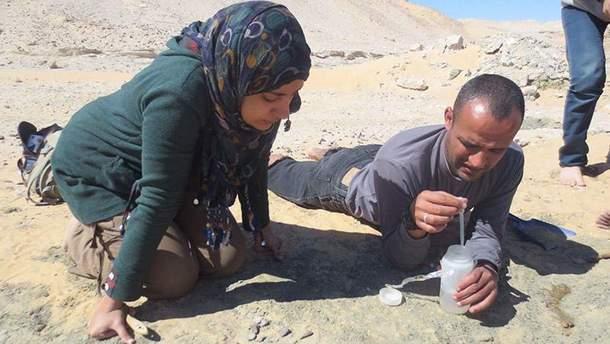 Археологи нашли останки динозавра в Египте