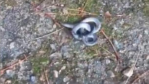 Двухголовая змея из Китая
