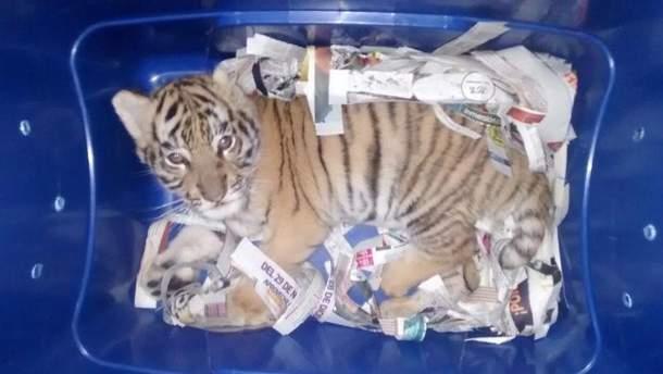 Мексиканская полиция обнаружила живого тигренка в посылке, которую неизвестный мексиканец отправил в другой штат