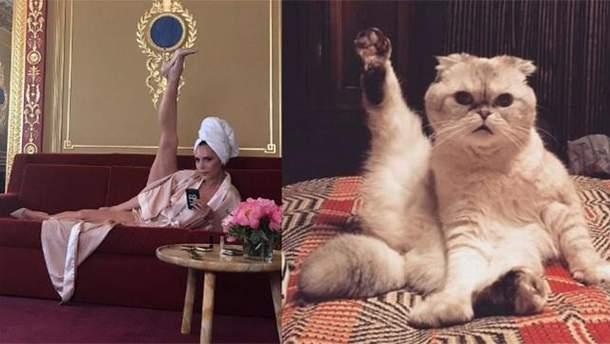 Кошка Тейлор Свифт приняла участие в флешмобе Виктории Бекхэм