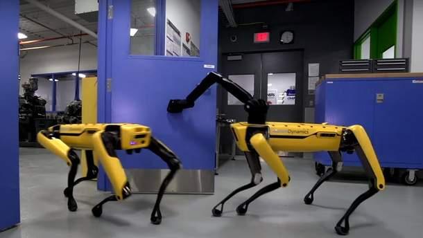 У роботов-собак появились руки