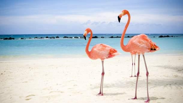 Робота мрії: на Багамах шукають доглядача за фламінго