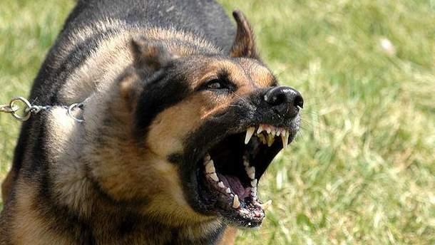 Чоловіка загризли собаки на Львівщині