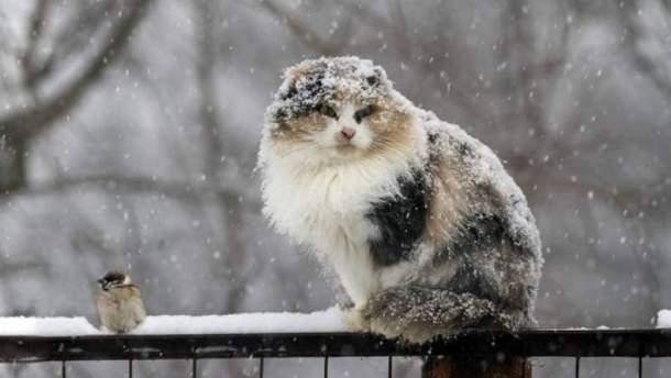Погода 3 марта в Украине будет формироваться под действием холодного циклона