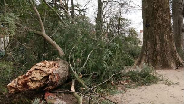 Мощная буря сломала дерево, которое посадил Джордж Вашингтон