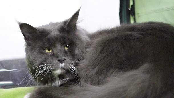 У Києві показали найбільшого кота країни: фото