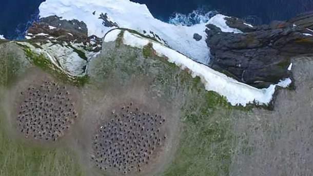 Из космоса обнаружили огромную колонию пингвинов