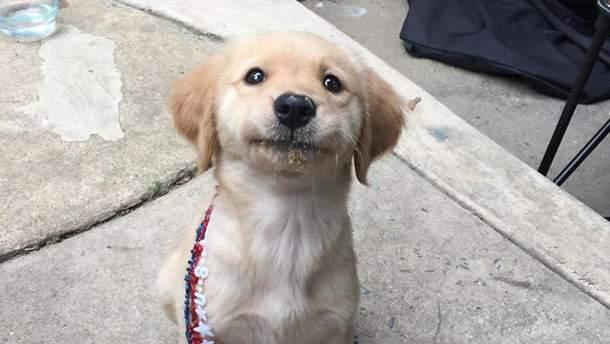 С собаками надо говорить ласково