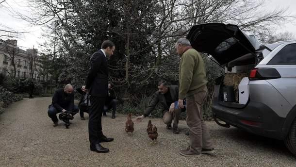 В Єлисейському палаці оселились кури