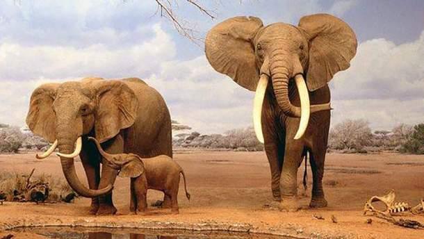 Слоны реже болеют раком